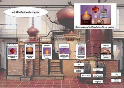 A6 - Distillation du cognac